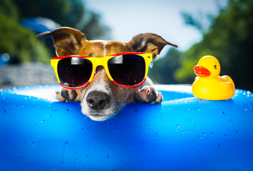image animaux vacances