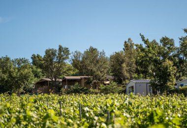 Flower Camping La Rouillère mobilhome vue sur les vignes