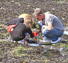 Campings pêche à pied Flower Campings de la Reneville
