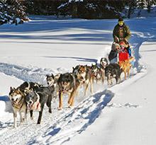chien de traineau vacances en camping en famille