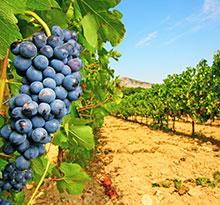Saint-Satur Flower Campings Les Portes de Sancerre vignes
